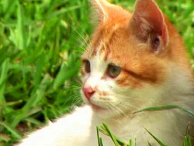 Trailer | Kitten Corner